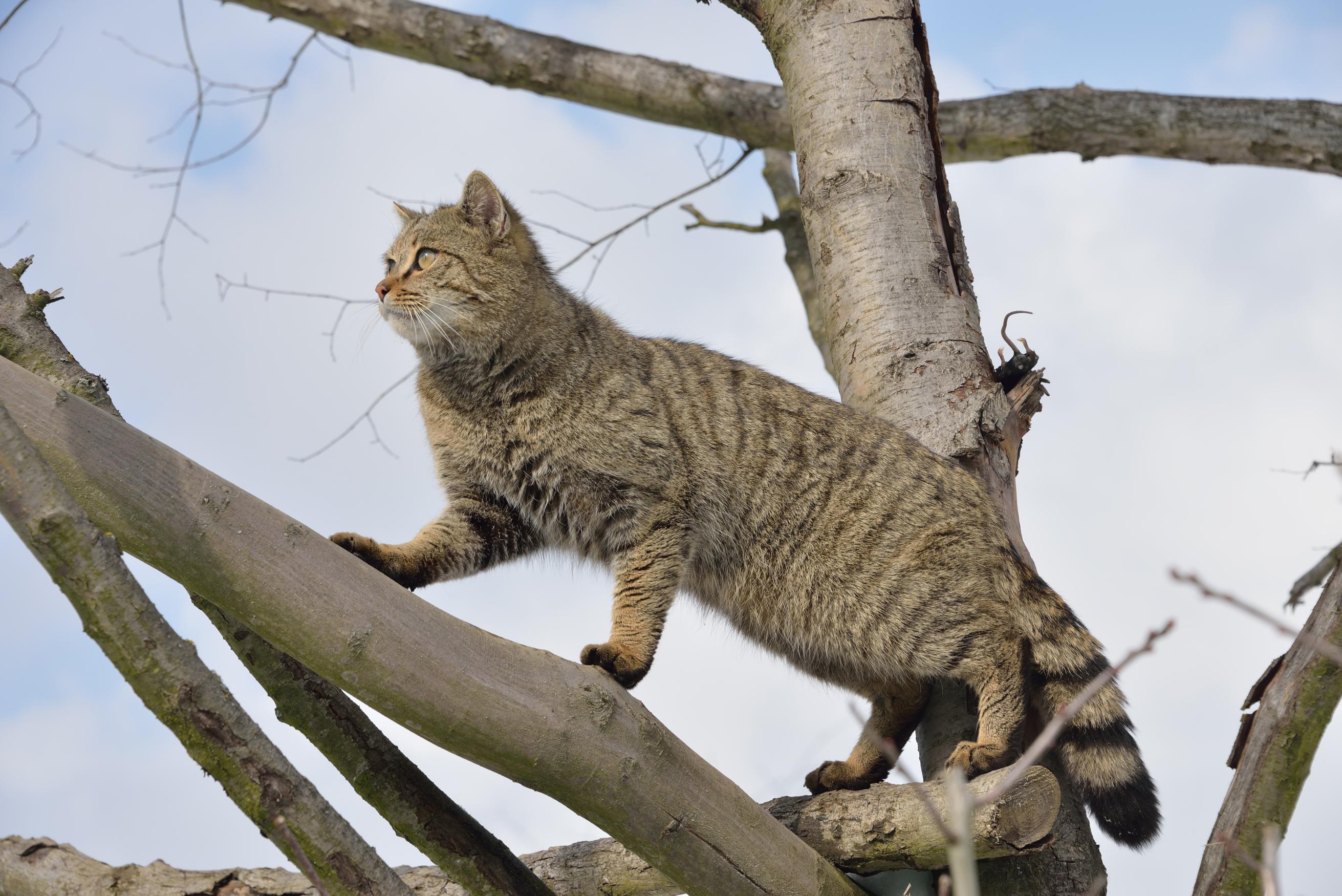 Bürgerbeteiligung für die Katz'