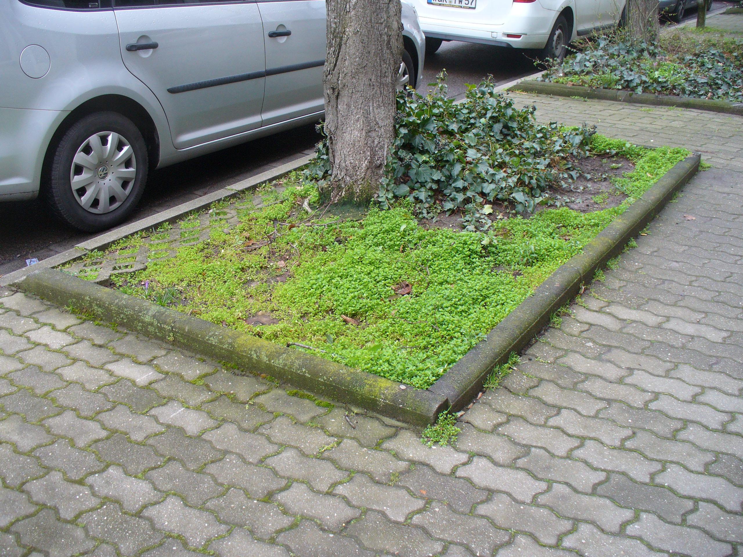 Wurzener können Baumpaten werden