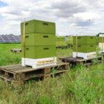 Solarpark Wurzen wird zur Bienenweide
