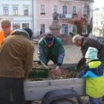 Kartoffeln lesen auf dem Wurzener Markt